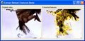 Extract Robust Features